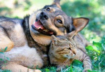 Токсоплазмоз у животных — болеть или не болеть?