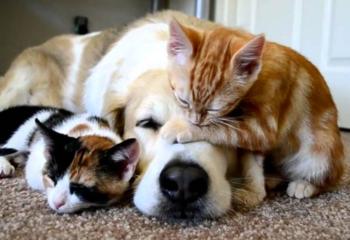 Спасительные таблетки для кошки — избавьтесь от глистов